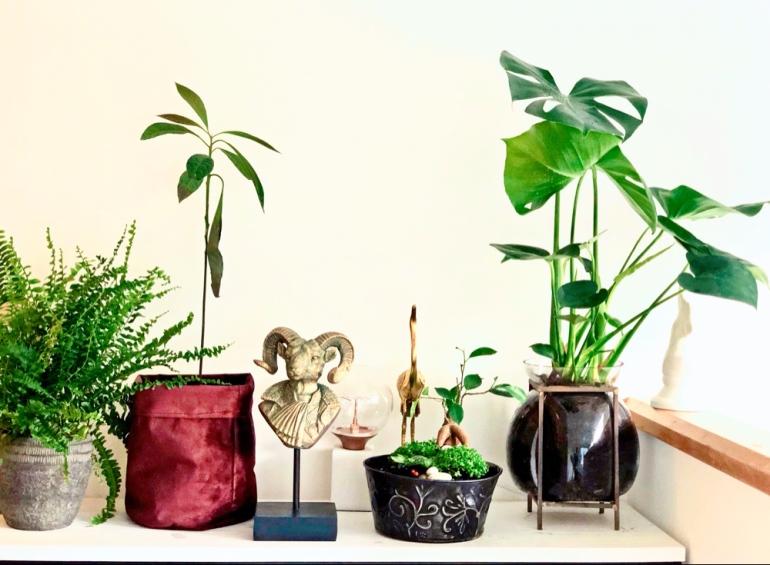 Bild på växter ormbunke avokado bonsaiträd och monstera en guldig get byst och en guld trana av sebastian thorell