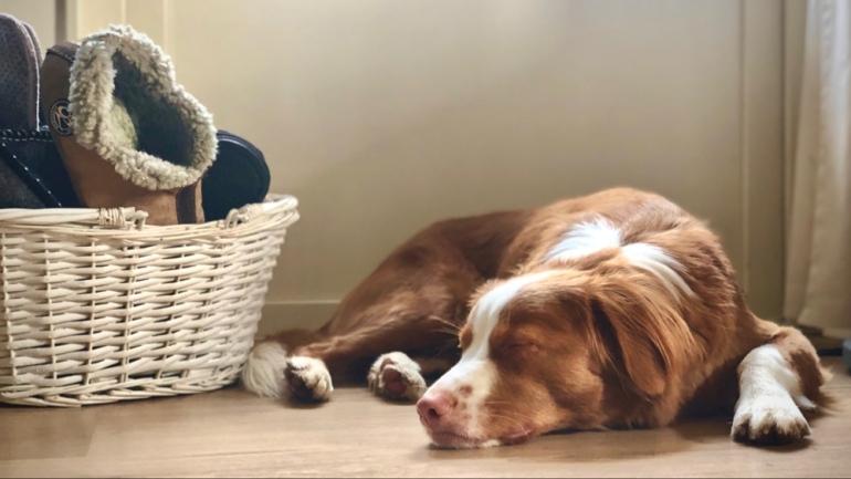 bild på sovande hund av sebastian thorell