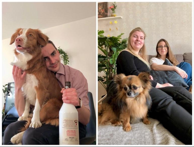 bild på hundar och glada människor