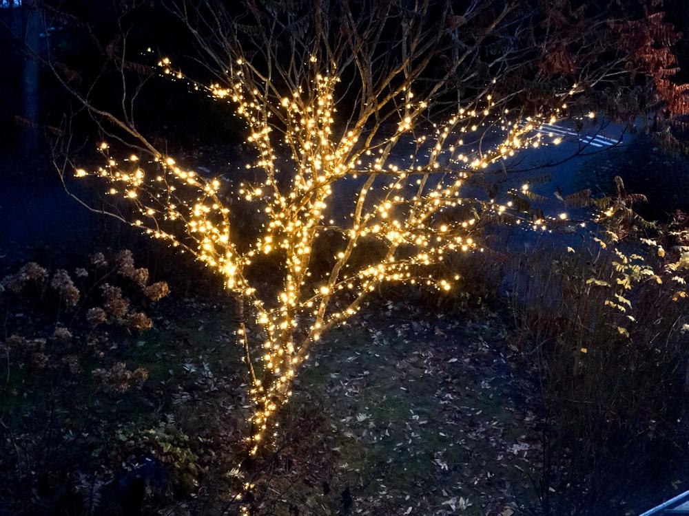 bild på ett träd i en trädgård med ljuslinga runt om sig och sina grenar av sebastian thorell
