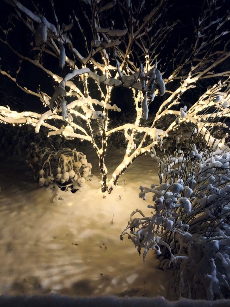 bild på ett träd i en trädgård med ljusslinga runt om sig och sina grenar täckt med snö