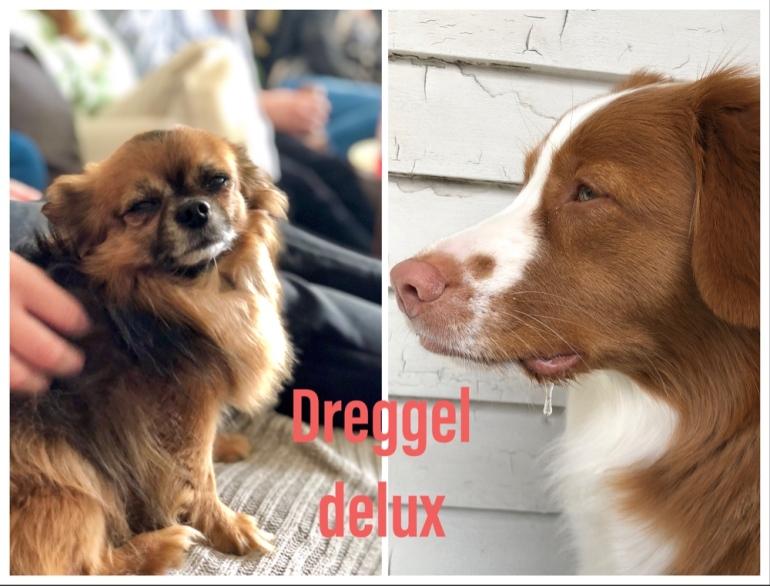 bild på en chihuaua och en hund som dregglar av sebastian thorell
