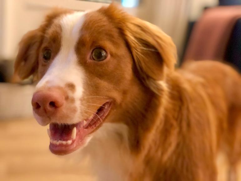 en närbild på en hund av sebastian thorell