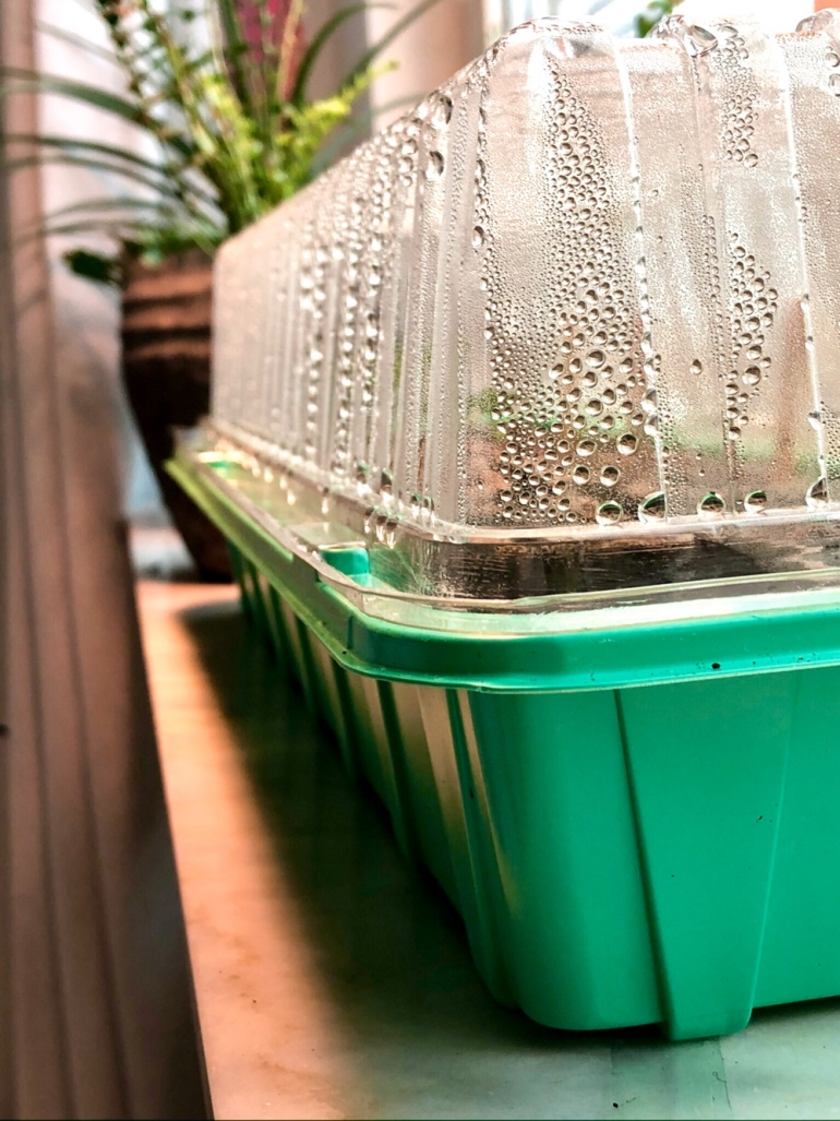 bild på ett mini växthus på ett fönsterbräde som är fuktigt av sebastian thorell