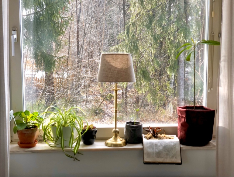 Bild på förnster med växter som elefantöra ampellilja fittonia citron avokado