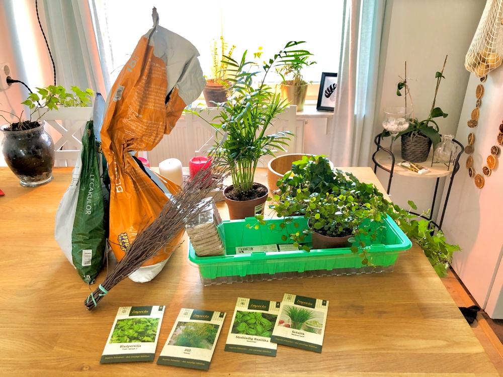 bild på ett bord med planteringsgrejer som jord kryddfröer och växter av sebastian thorell