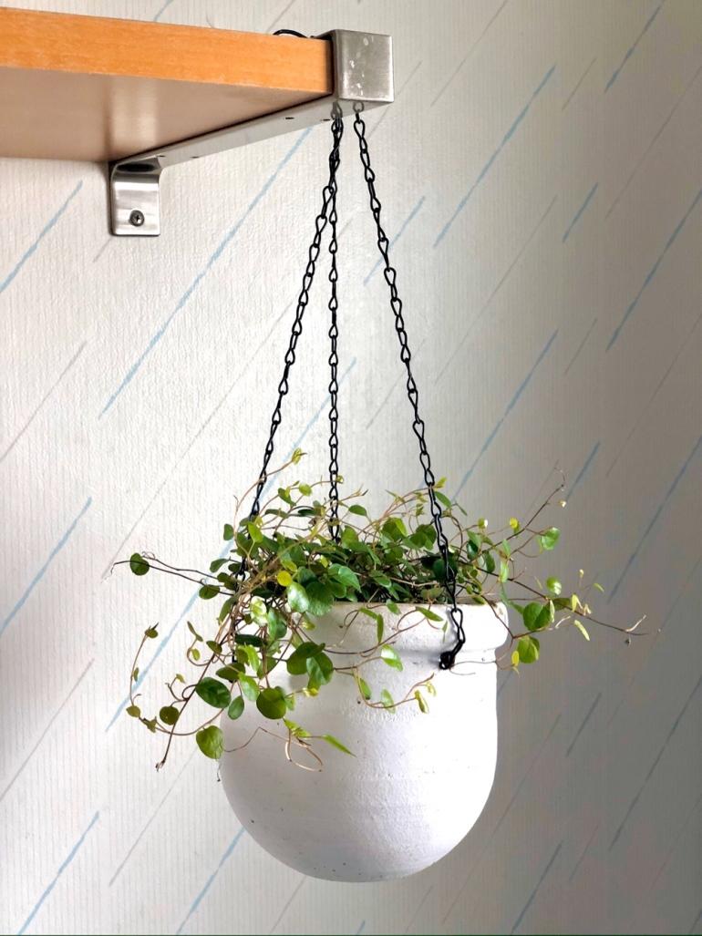 bild på en plättar i luften som hänger i en ampel i badrum av sebastian thorell