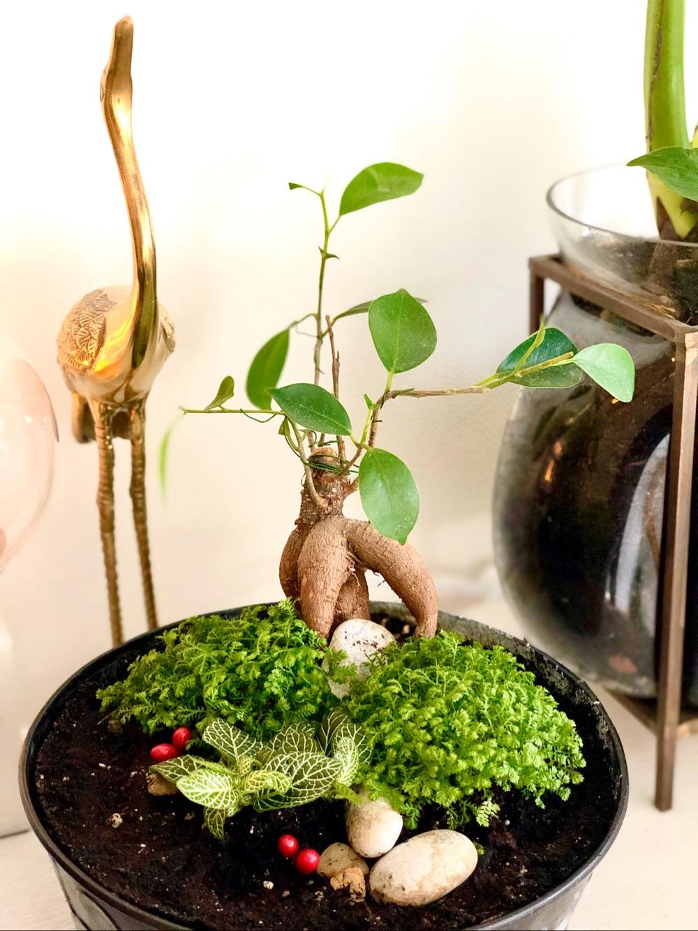 bild på ett bonsaiträd tillsamans med små växter guld trana syns bakom